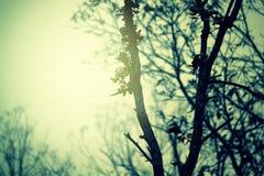 Twig Stock Photo