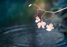 Twig of pink orchid Stock Images