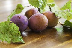 Twig with plums Royalty Free Stock Photo