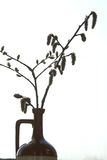 Twig pussy-willow in vase Royalty Free Stock Photos