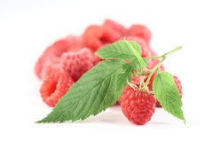 Twig of raspberry and raspberries isolated white b Royalty Free Stock Images