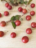 Twig with red cherry plums Royalty Free Stock Images