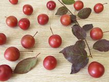 Twig with red cherry plums Royalty Free Stock Photos