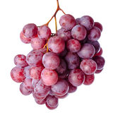 Twig of red grapes isolated on white background. Close up Royalty Free Stock Images