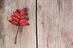 Twig with red leaves on old wood Stock Image