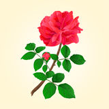 Twig red rose with bud vector Stock Image