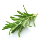 Twig of rosemary Stock Photos