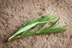 Twig of rosemary Stock Photography