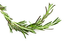 Twig of rosemary. On a white background Stock Photo