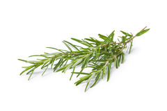 Twig of rosemary Royalty Free Stock Photos