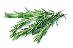 Twig of rosemary Stock Images