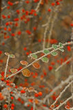 Twig with small frozen leaves Stock Photo