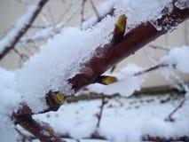 Twig with snow flakes closeup shot Stock Photos