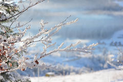 Twig in the snow. Tree branch under snow cap in mountains Stock Photo
