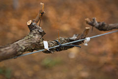 Twig spinning on metal rail in vineyard Stock Image