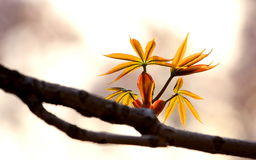 Twig_on_spring_tree Images libres de droits