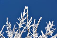 Twig täckte i snow royaltyfri fotografi