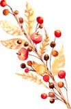 Twig Watercolor Stock Photos