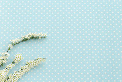 Twig with white flowers. Polka dot background Stock Photography