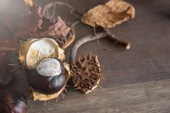 Chestnut in a shell. A twig with wild chestnuts and dry leafs on a wooden background Royalty Free Stock Images