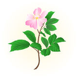 Twig wild rose vector Stock Image