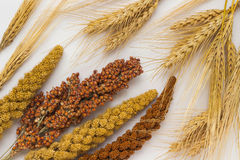 Twig of yellow and red millet. Sorghum. Sprigs of wheat. Sprigs of barley royalty free stock photography