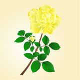 Twig yellow rose stem with leaves and bud vector Stock Photo