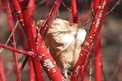 Twiged leaf Stock Photo