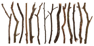 Twigs Stock Photography
