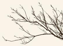 twigs Lizenzfreie Stockbilder