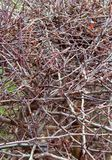 Twigs. Background stock photography