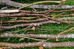 Twigs. Several newly cut twigs lying on the ground stock images