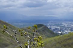 Twigs above the salt lake city valley royalty free stock photography