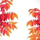Twigs with autumn red and yellow leaves Royalty Free Stock Image