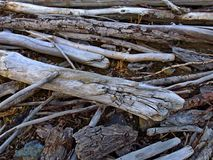 Twigs and bark of trees. Dry twigs and bark of the trees on the banks of the river after the flood Stock Photography