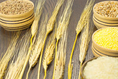Twigs barley. Wheat, buckwheat, rice, millet Stock Photography