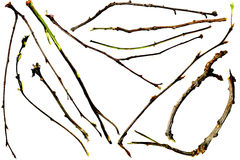 Twigs and Branches Royalty Free Stock Photos