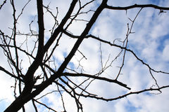 Twigs branching. Bare branches in the autumn stock photography