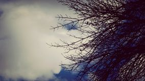 Twigs and clouds Royalty Free Stock Photography
