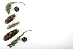 Twigs and Cones. Random mix of pine cones, spruce cones, juniper and spruce twigs.   Copy space in the right side of image Stock Images