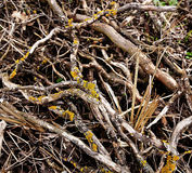 Twigs Royalty Free Stock Photography