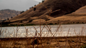 Twigs. Dry twigs beside a lake in a hilly region Royalty Free Stock Images