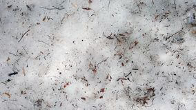 Twigs and dry leaves on the forest floor. The snow is melting.The snow is melting. Spring is coming stock photography