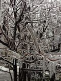 Twigs encased in ice after a night of freezing rain Royalty Free Stock Photo
