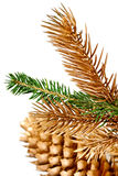 Twigs of fir tree. Royalty Free Stock Photography