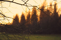 Twigs and forest edge Stock Photos