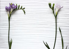 Twigs of fresh freesias flowers stock images