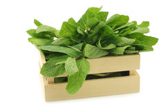 Twigs of fresh mint in a wooden box Stock Photo
