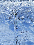 Twigs with frozen buds Stock Image