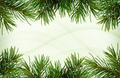 Twigs of green Christmas tree for borders. Twigs of Christmas tree for borders on green abstract background stock images